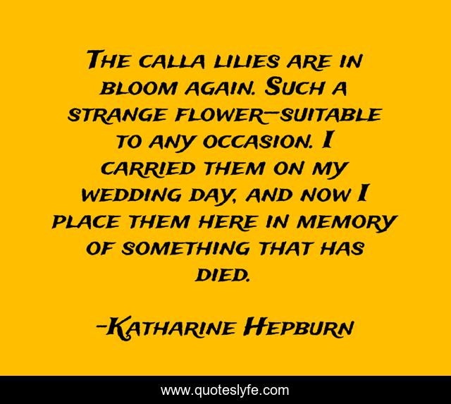 The calla lilies are in bloom again. Such a strange flower—suitable to any occasion. I carried them on my wedding day, and now I place them here in memory of something that has died.