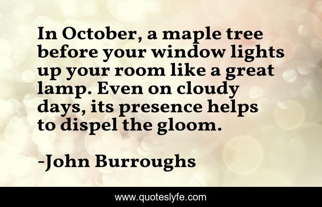 In October, a maple tree before your window lights up your room like a great lamp. Even on cloudy days, its presence helps to dispel the gloom.