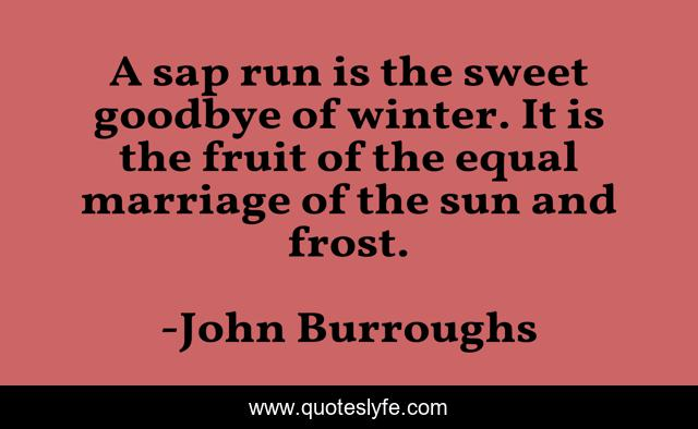 A sap run is the sweet goodbye of winter. It is the fruit of the equal marriage of the sun and frost.
