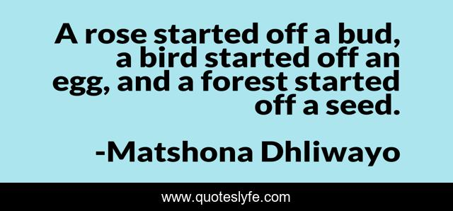 A rose started off a bud, a bird started off an egg, and a forest started off a seed.