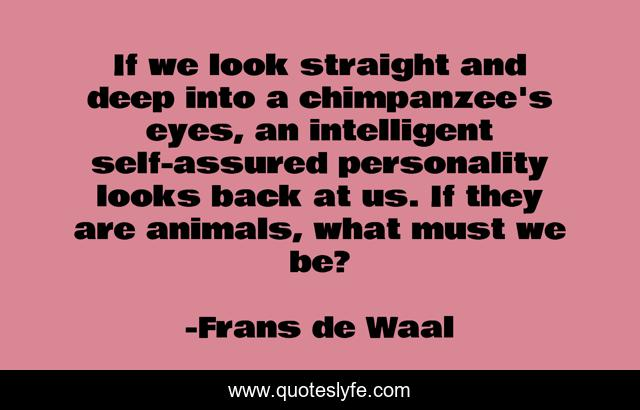 If we look straight and deep into a chimpanzee's eyes, an intelligent self-assured personality looks back at us. If they are animals, what must we be?