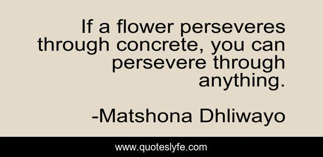 If a flower perseveres through concrete, you can persevere through anything.