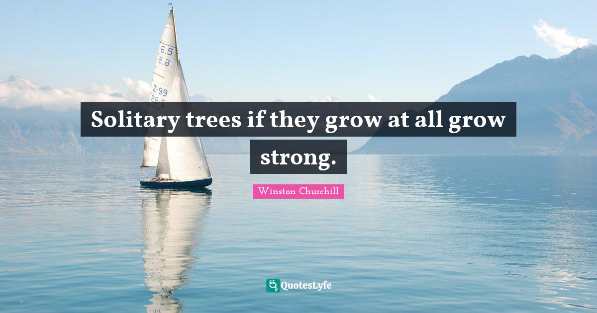 Winston Churchill Quotes: Solitary trees if they grow at all grow strong.