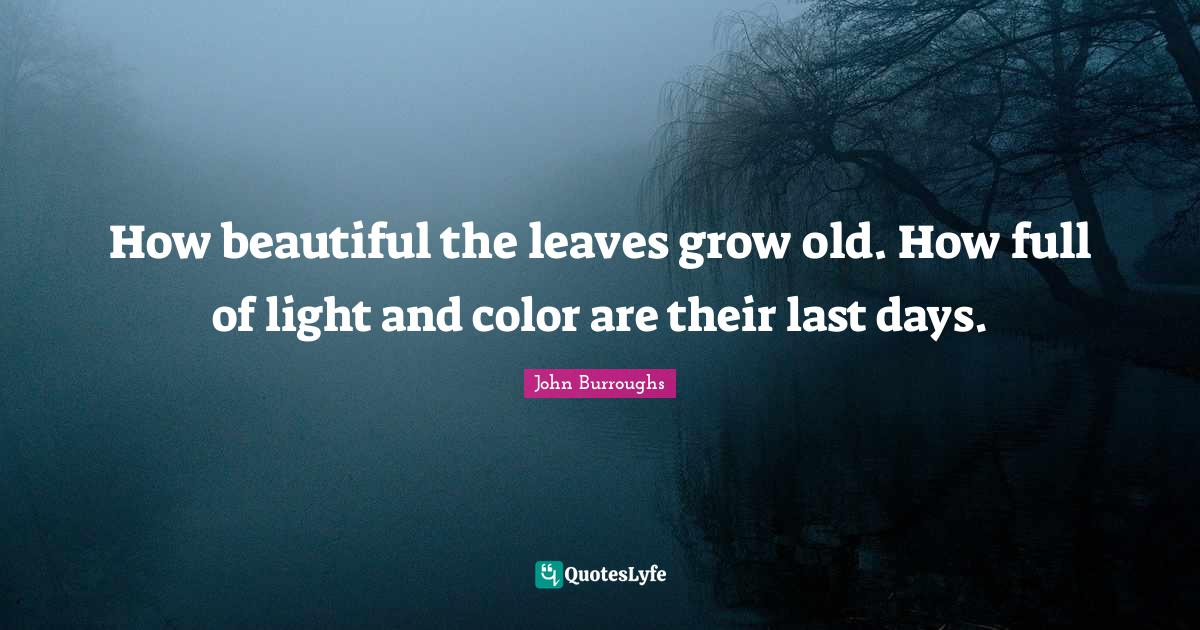 John Burroughs Quotes: How beautiful the leaves grow old. How full of light and color are their last days.