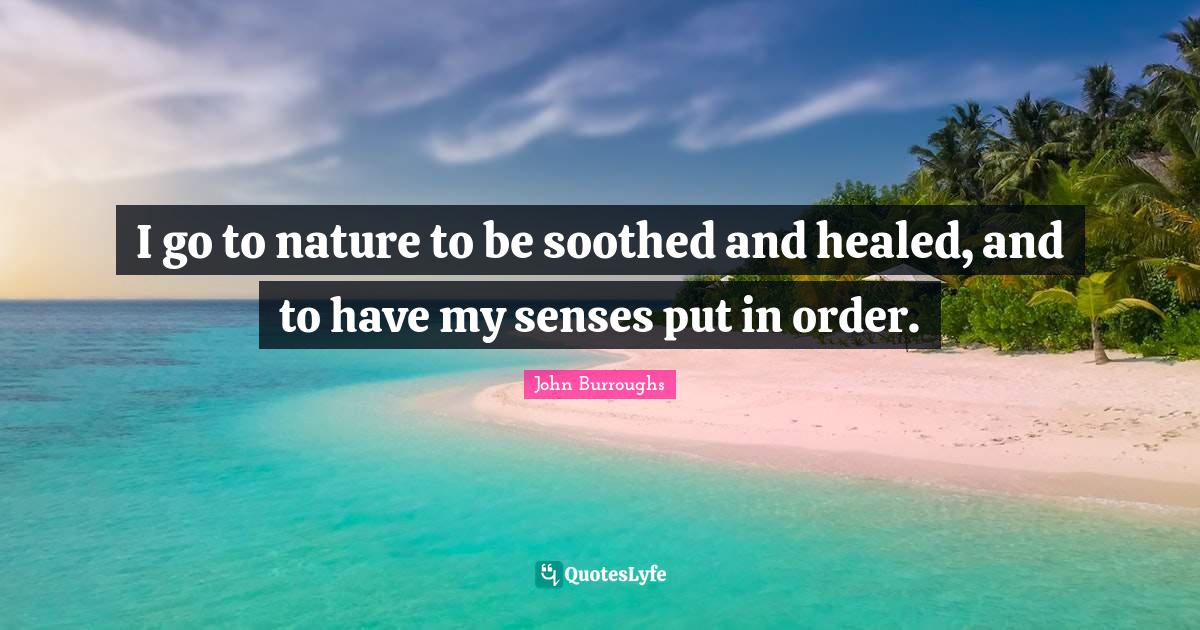 John Burroughs Quotes: I go to nature to be soothed and healed, and to have my senses put in order.