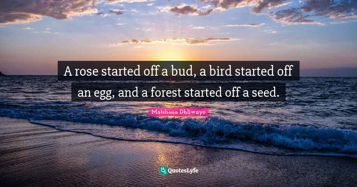 Matshona Dhliwayo Quotes: A rose started off a bud, a bird started off an egg, and a forest started off a seed.