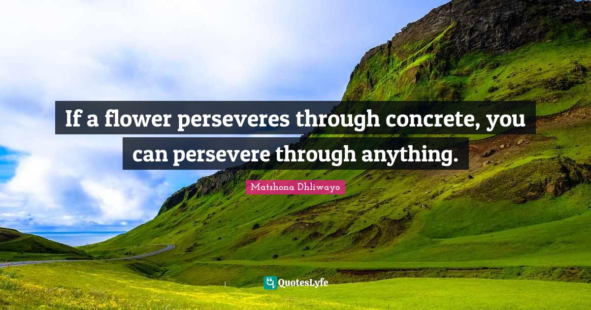 Matshona Dhliwayo Quotes: If a flower perseveres through concrete, you can persevere through anything.
