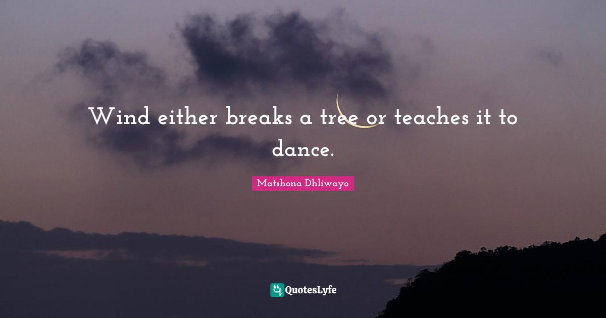 Matshona Dhliwayo Quotes: Wind either breaks a tree or teaches it to dance.